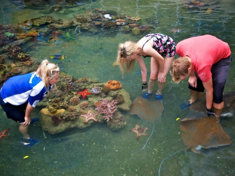 Guests enjoying the Daydream Island Resort Living Reef and patting the rays.