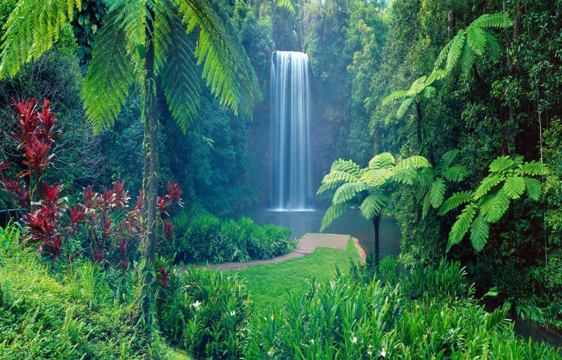 Millaa Millaa Waterfalls north of Palm Cove | Discover Queensland