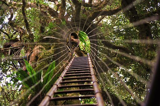 O'Reilly's Rainforest Resort Suspension Bridge - Hightide Holidays
