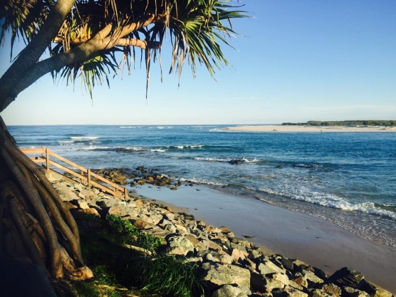Pandanus Tree Against Caloundra Beach - Discover Queensland