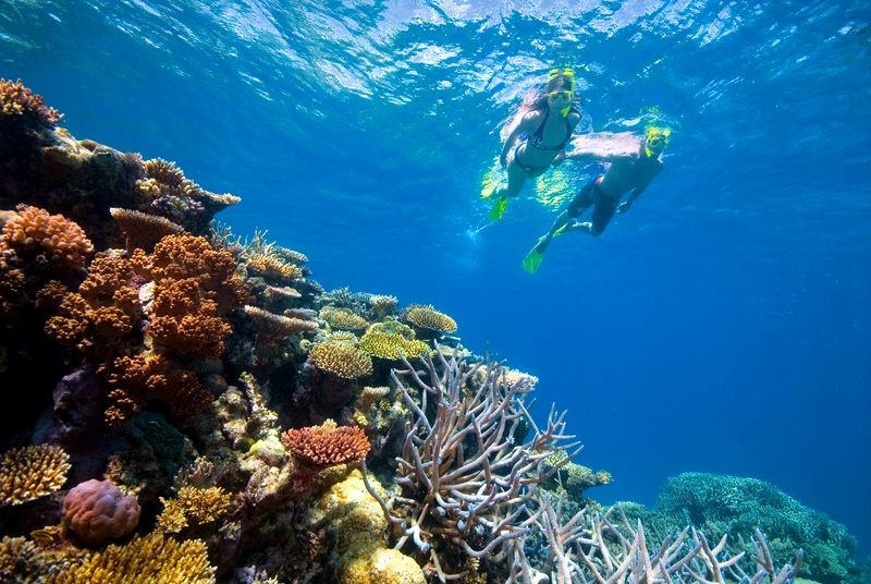 Swimming along the outer Great Barrier Reef just off the Shores of Port Douglas in Tropical North Queensland - Discover Queensland