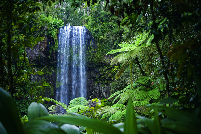 Milla Milla Falls in the Daintree Rainforest in Tropical North Queensland just outside Port Douglas - Discover Queensland