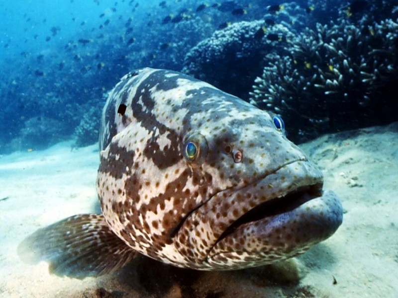 Things to do in Port Douglas - Meet George the Giant Groper - Discover Queensland