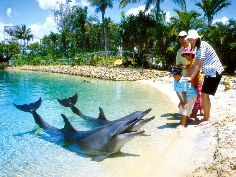 Seaworld - Gold Coast Theme Parks - Discover Queensland