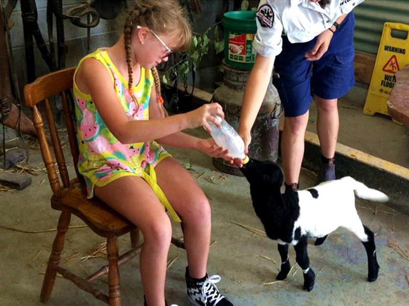 Baby Animal Feeding at Pardise Country Farmstay | Discover Queensland