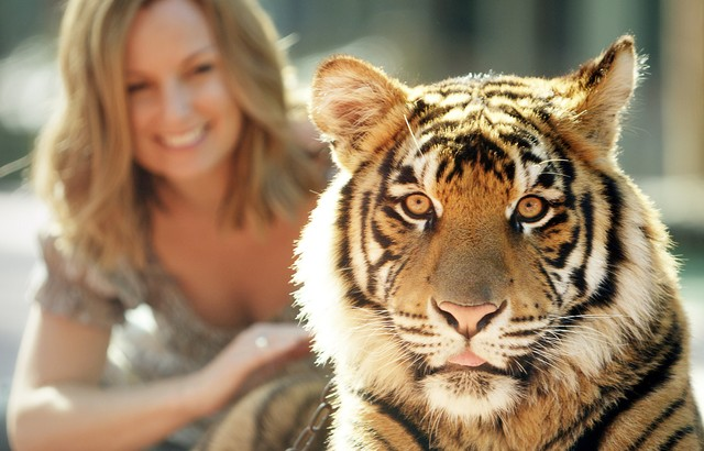 Dreamworld's Tiger Island
