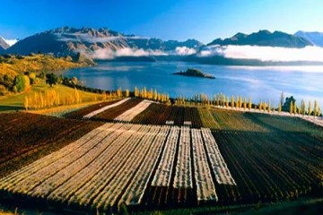 Rippon Wines - Queenstown Holidays