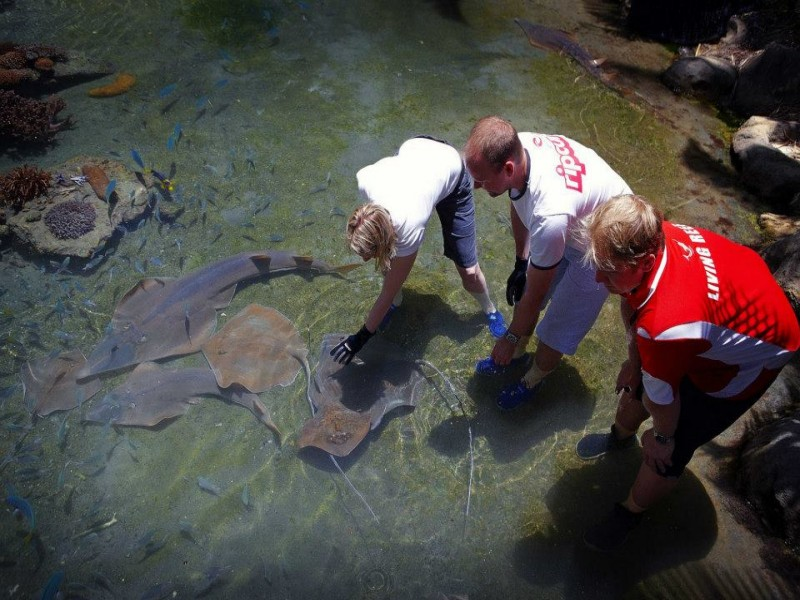 Guests patting rays in Daydream Island's Live Reef Supervised by staff.