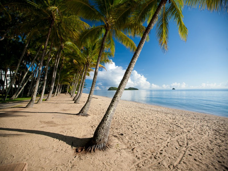 Palm-lined Palm Cove | Discover Queensland