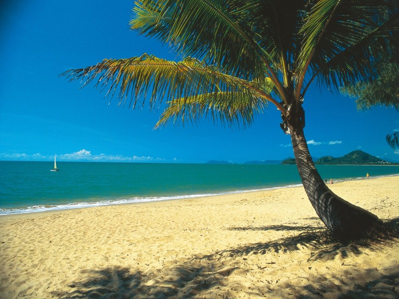 Palm Cove Beach with golden sand, aqua water and palm tree | Discover Queensland