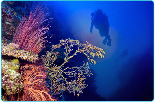 People scuba diving off Port Douglas looking at beautiful coral.