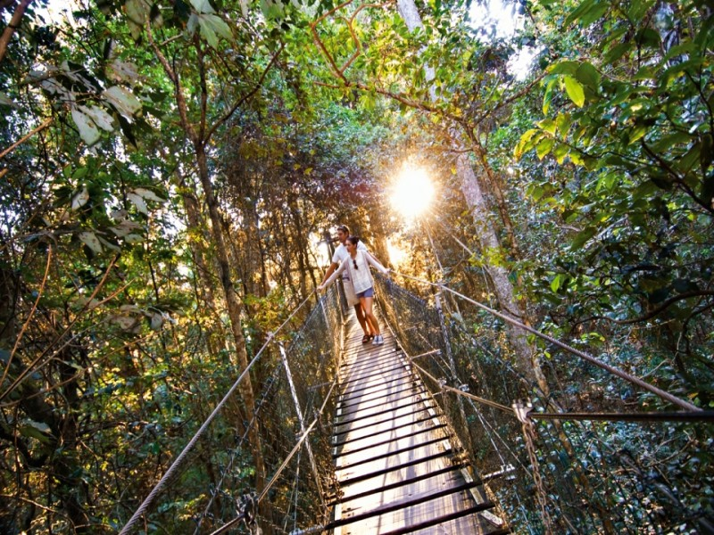 O'Reilly's Rainforest Retreat Tree Top Walk - Discover Queensland