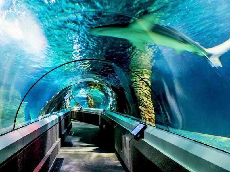 Kids marvelling at Shark at Underwater World, Mooloolaba. Sunshine Coast attractions - Discover Queensland
