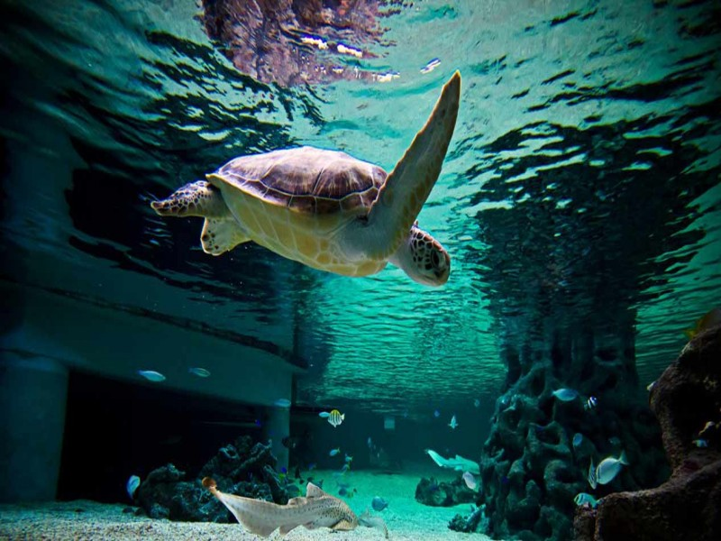 Underwater World Mooloolaba - Discover Queensland