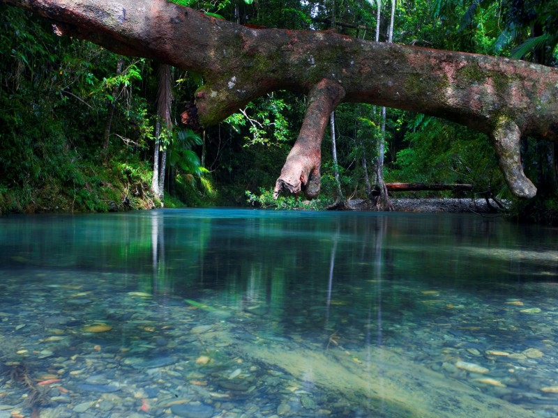 Daintree Rainforest in Tropical North Queensland - Discover Queensland