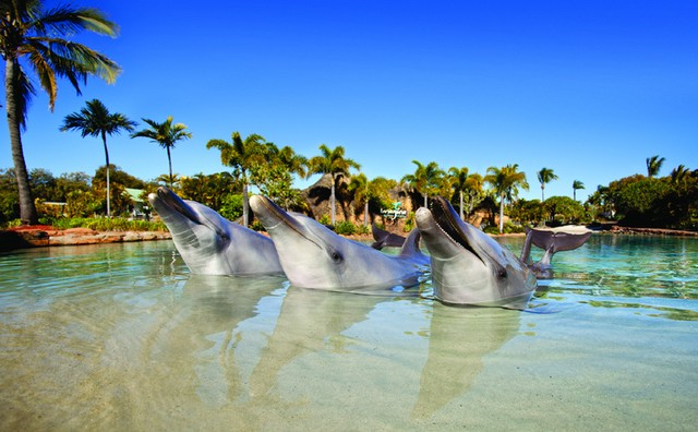 Dolphin Discovery Presentation at Sea World Resort on the Gold Coast | Discover Queensland