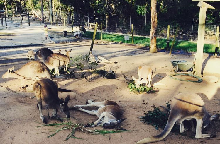 Kangaroo Sunset Tour | Discover Queensland