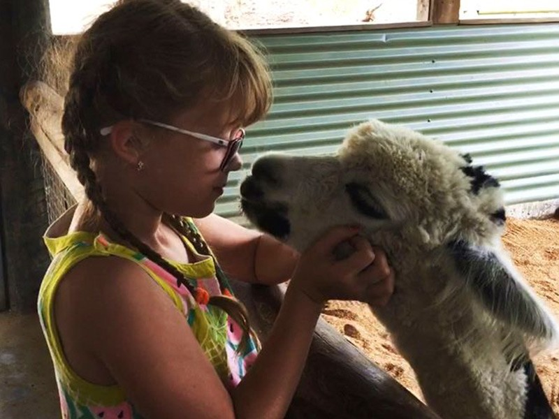 Alpaca Meets Child at Paradise Country Farmstay Animal Meet and Greet | Discover Queensland