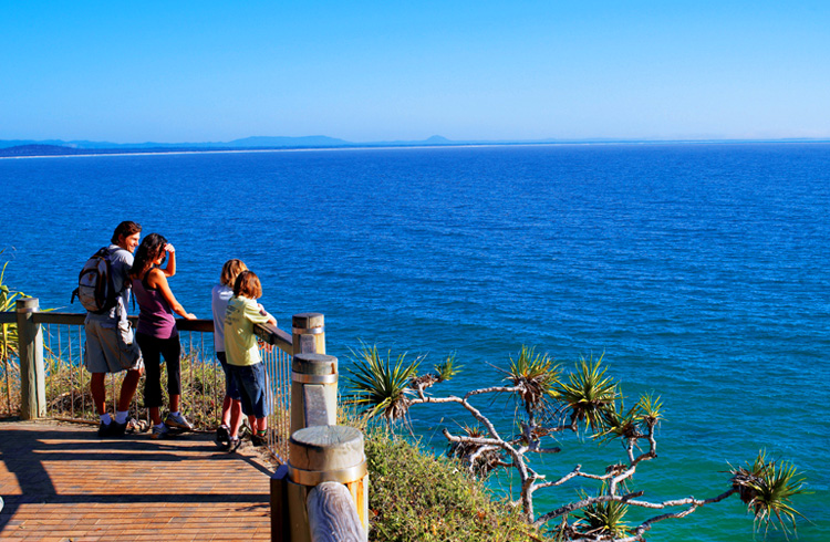 Koala Spotting at Noosa National Park | Best Things to do with Kids on the Sunshine Coast | Discover Queensland