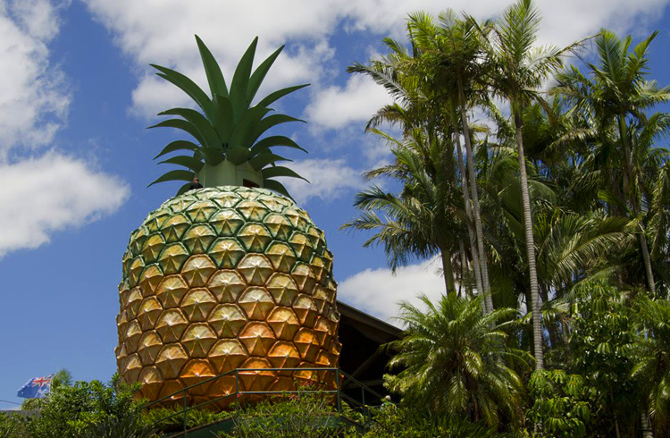 The Big Pineapple on the Sunshine Coast | Best Things to do with Kids on the Sunshine Coast | Discover Queensland