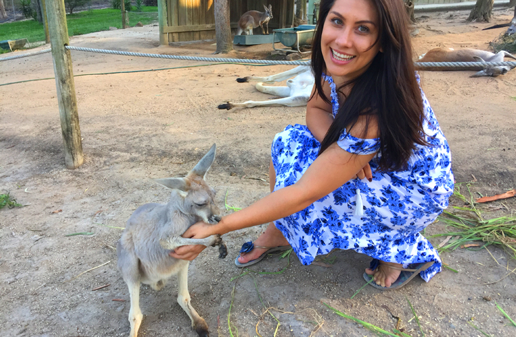 Kangaroo Sunset Tour at Paradise Country - Your Gold Coast Farmstay Weekend Itinerary - Discover Queensland