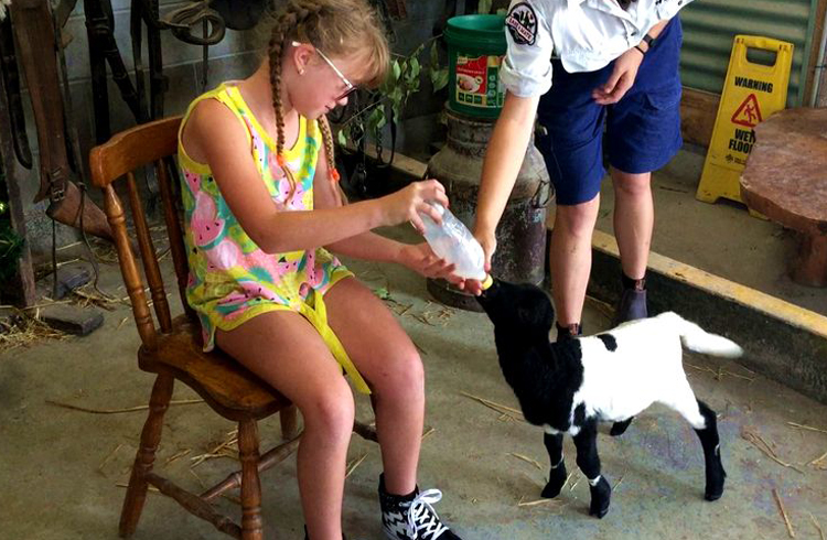 Baby Animal Feeding at Paradise Country | Your Gold Coast Farmstay Weekend Itinerary | Discover Queensland