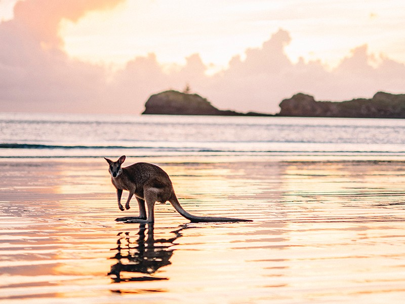 Surprise Queensland Destinations – Holiday Locations You Didn't See Coming! | Cape Hillsborough, Mackay | Discover Queensland