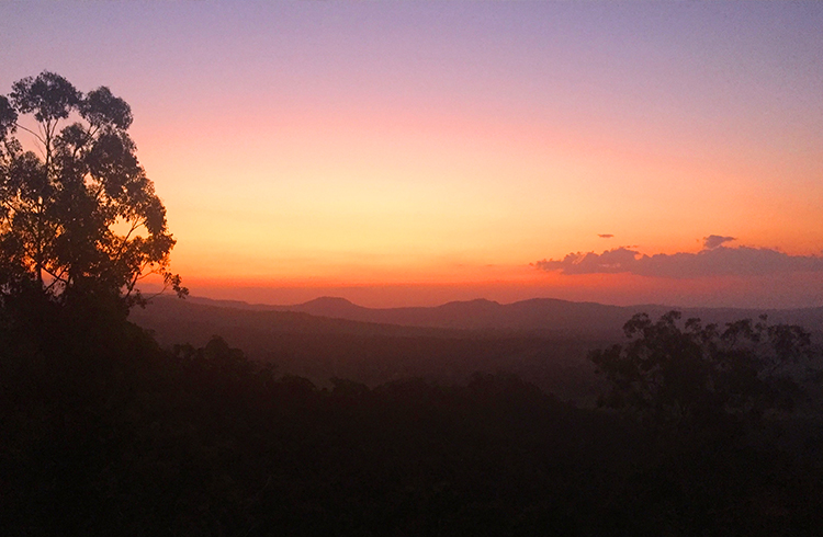 5 Day Trips to Take From the Gold Coast - Mount Tamborine in the Gold Coast Hinterland - Discover New South Wales
