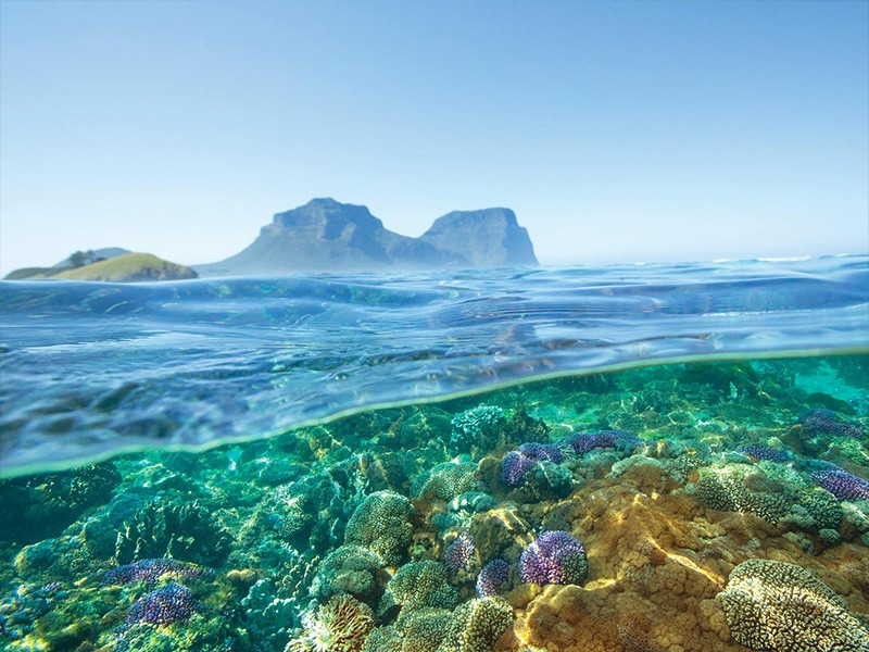 Snorkeling Lord Howe Island - Destination New South Wales