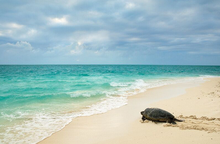 Heron Island   Our Top 4 Luxury Island Resorts   Discover Queensland
