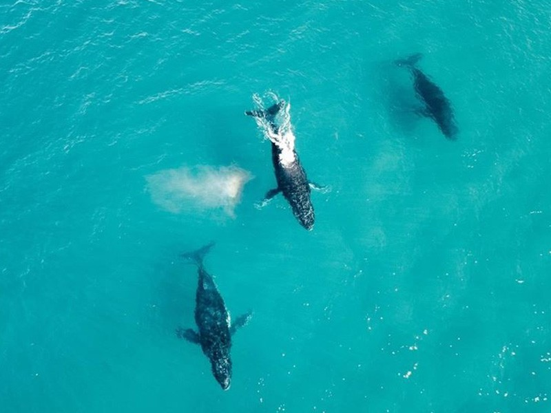Whale Watching along 75 Mile Beach | Image by @hilltopsandflipflops via Instagram | 15 Photos That Will Make You Want to Visit Fraser Island | Discover Queensland