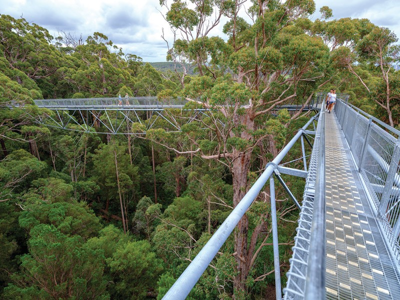 Valley of the Giants Tree Top Walk | Image via Tourism Western Australia | Where to Get Back to nature in the Margaret River | Discover Western Australia