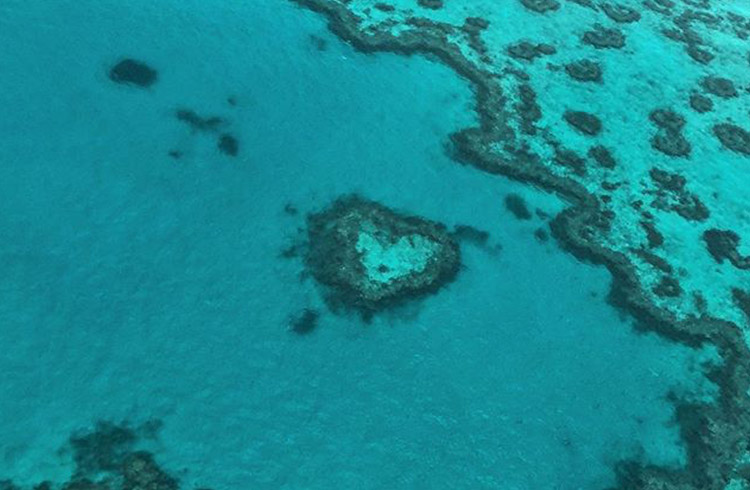 Heart Reef | Your Guide to the Whitsundays | Discover Queensland | Image by @roxyjinnn