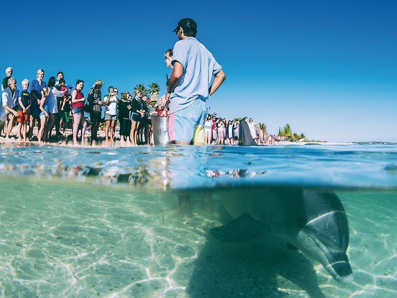 Feed the Dolphins | Image via Tourism Western Australia | How to spend a week in Monkey Mia | Discover Western Australia