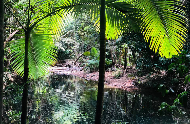 Mason's Swimming Hole | A Day in the Daintree | Discover Queensland
