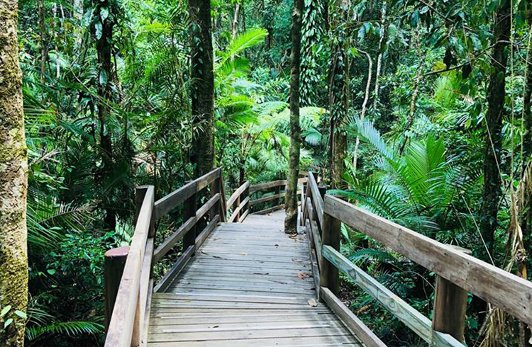 Jindalba Boardwalk | A Day in the Daintree | Discover Queensland