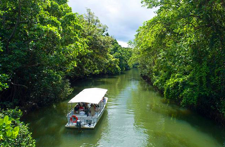 Daintree River Cruise by @billyteasafaris_ via Instagram | A Day in the Daintree | Discover Queensland