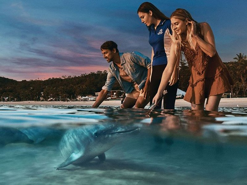 Wild Dolphin Feeding | Top 30 Things to do at Tangalooma Island Resort on Moreton Island | Discover Queensland