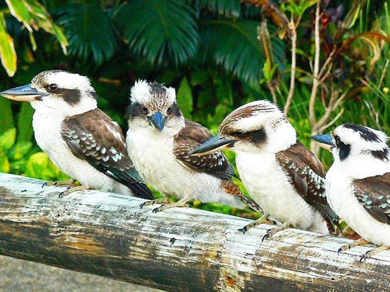 Meet The Locals - Bird Watching   Image by @wanderingwife   Top 30 Things to do at Tangalooma Island Resort on Moreton Island   Discover Queensland
