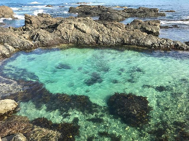 Kings Beach Rockpools by @aidan_elliottt | Best Sunshine Coast Beaches for Young Children | Discover Queensland