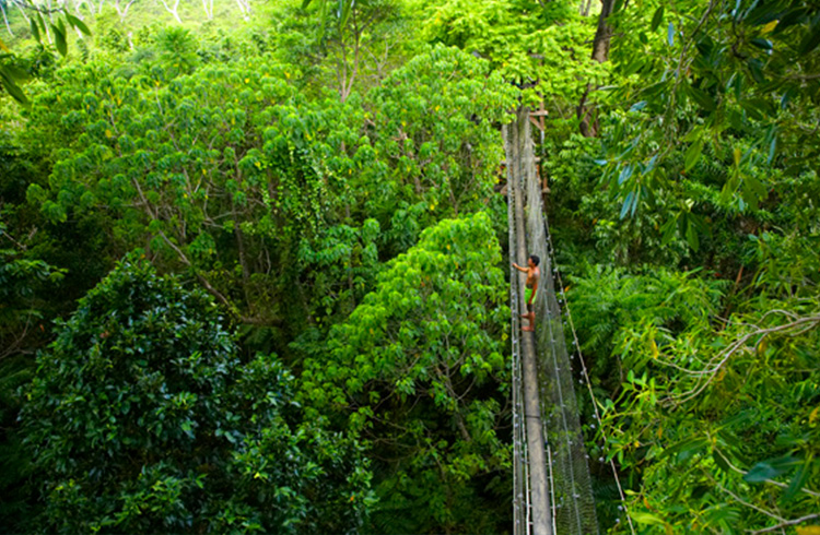 Canopy Walkway | Your Guide to Samoa | Global Explorer