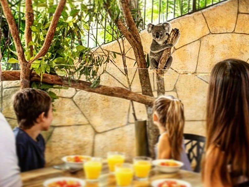 Breakfast with Koalas, Hamilton Island | Image by @hamiltonisland via Instagram | Top 10 Things to do on Hamilton Island | Global Explorer