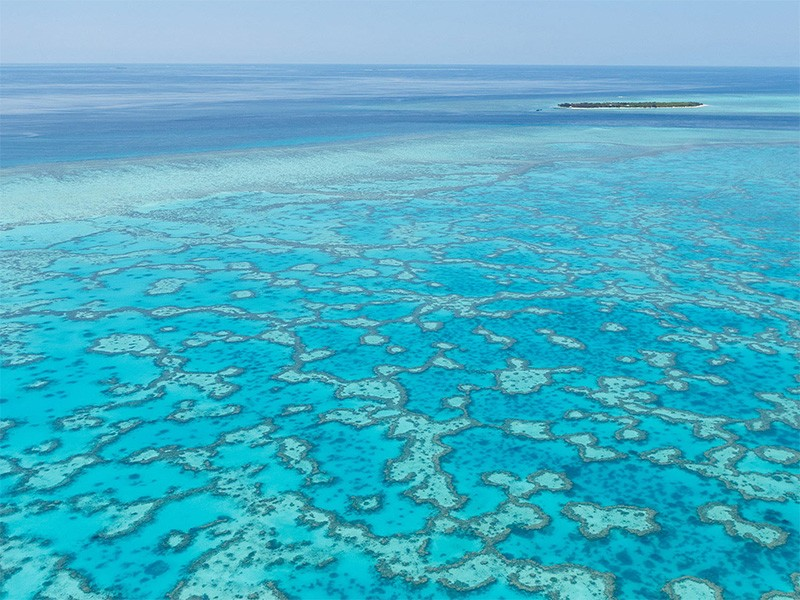 Heron Island | Great Barrier Reef Diving - Our Favourite Spots