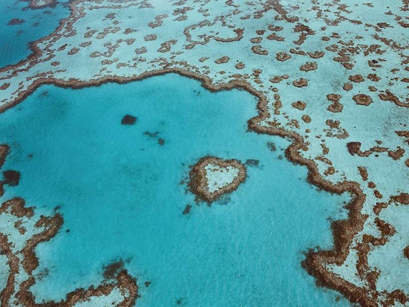 Hardy Reef | Photography by Jason Hill via TEQ | Great Barrier Reef Diving - Our Favourite Spots