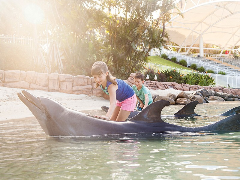 Dolphin with Family at Sea World Resort