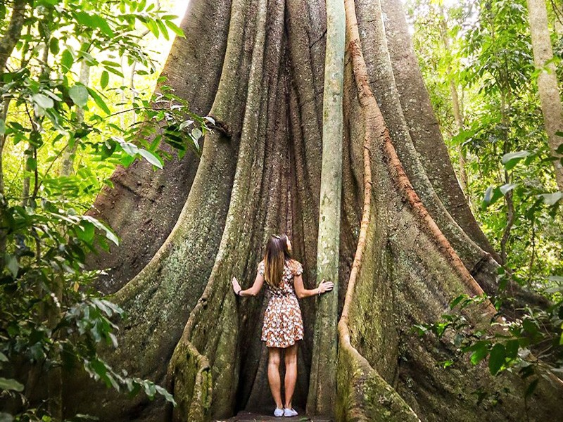 @kerriaconn capturing the Fig Tree Walk | Cambroon Things To Do | Discover Queensland | Sunshine Coast Hinterland Highlights Brisbane Road Trip