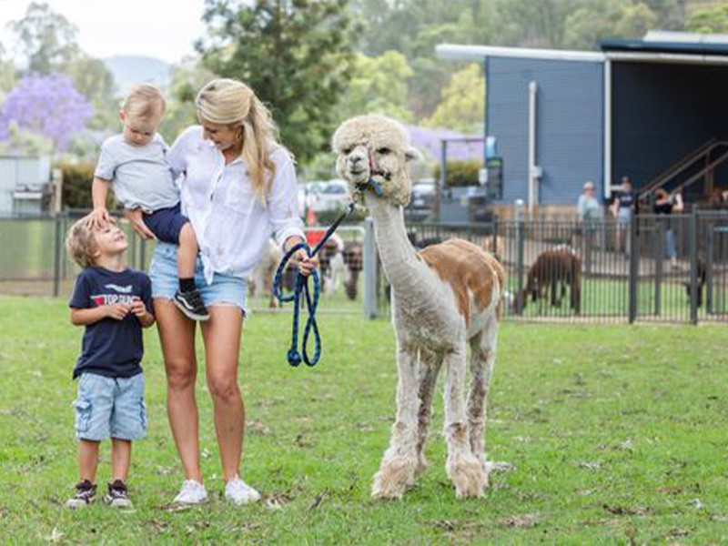 Grapes & Alpacas - Canungra Valley Vineyard and Alpaca Farm | Top 30 Things To Do on the Gold Coast | Discover Queensland