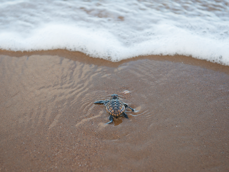 Mon Repo Turtle Centre | Top things to do in Bargara: Tipples, Turtles, Tastings, Towers & more! | Discover Queensland