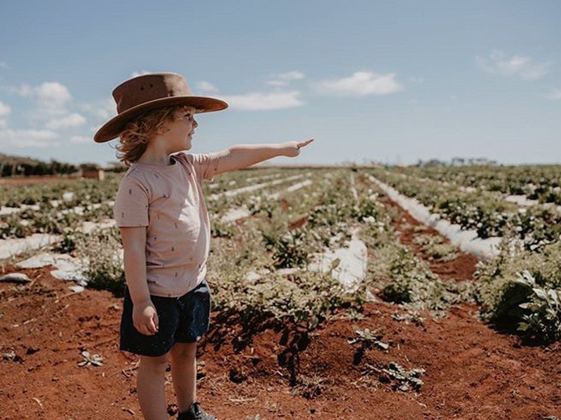 Pick your own strawberries at @tinaberries.strawberries | Top things to do in Bargara: Tipples, Turtles, Tastings, Towers & more! | Discover Queensland