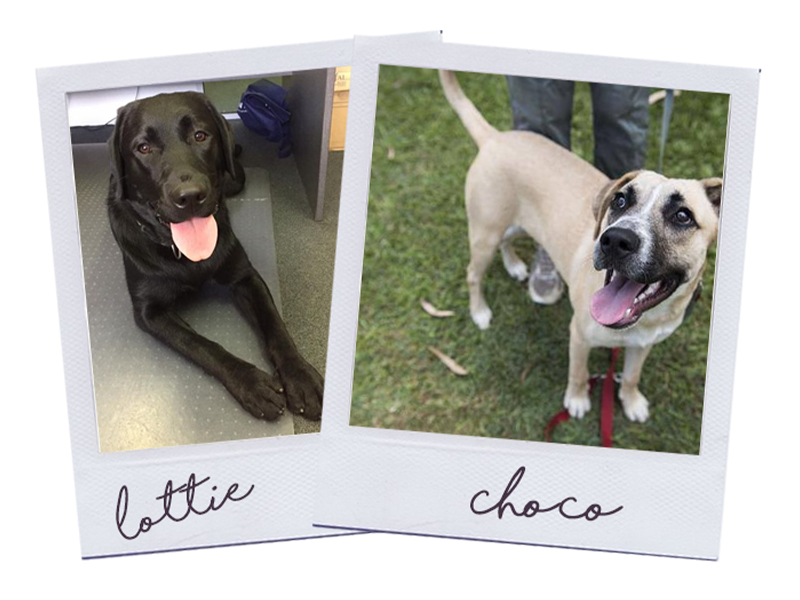 Choco and Lottie | RSPCA Cupcake Day | Discover Queensland